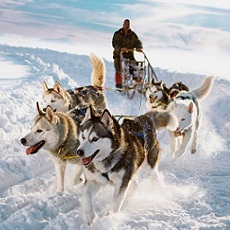 Husky Dog Sledding | Daytime Activities, Experiences, Tours and Events | Weekend In Riga | Quick Quote | Weekend In Riga