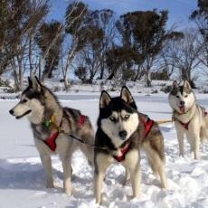 Dog Power | Husky Dog Sledding | Day Activities | Weekend In Riga