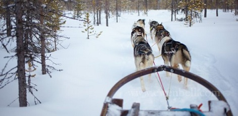 Availability | Husky Dog Sledding | Day Activities | Weekend In Riga